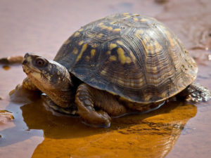 Turtles ROCK: 7/25/18 (Register all, but geared for the 'littles')